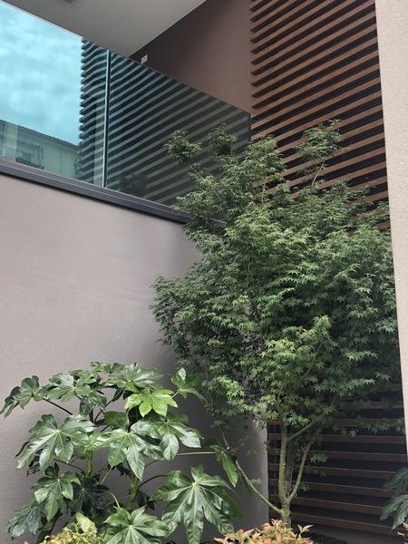 giardino (2) - APPARTAMENTO ATTICO VENEZIA (VE) MESTRE, CENTRO